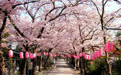 nguồn gốc lễ hội hanami